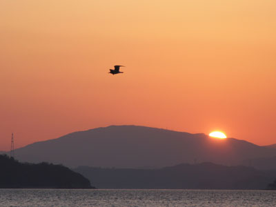 夕陽とカモメ
