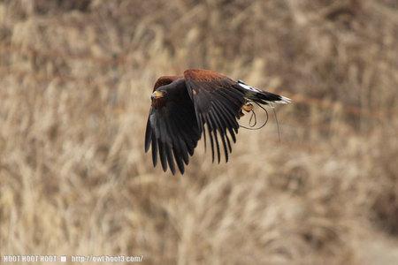 飛ぶギンジ