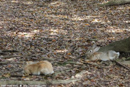 ウサギとホオジロ