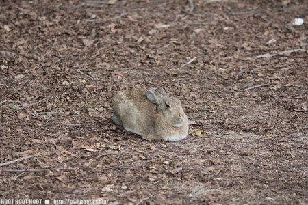 迷彩ウサギ