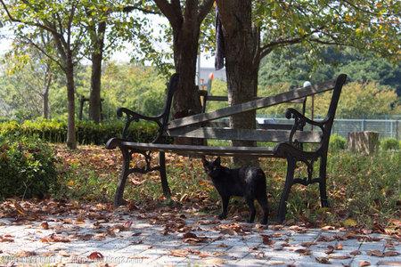 ベンチと黒猫