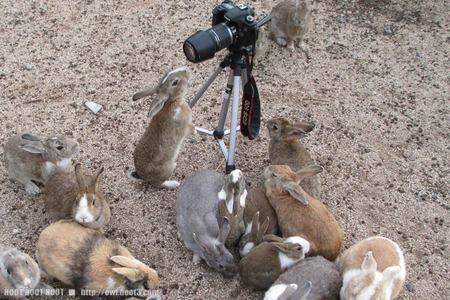 カメラとウサギ