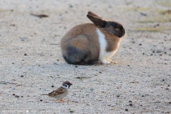 ウサギとスズメ
