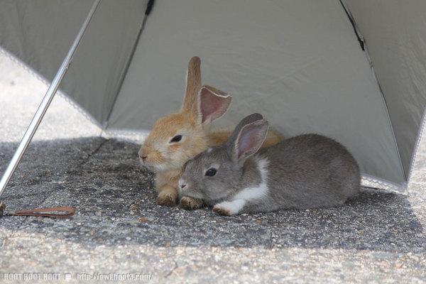 日傘ウサギ